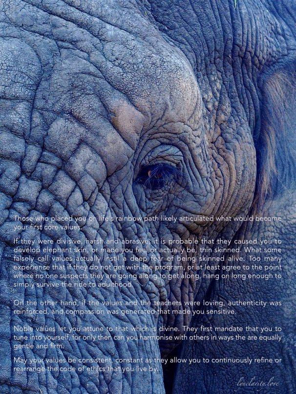 rule 7 elephant skin blog